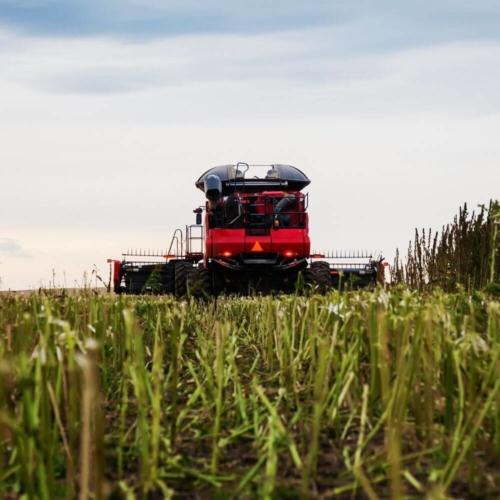 Organiczne uprawy konopi CBD Spectral